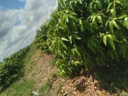 Título do anúncio: Lote agrícola no projeto ponta da serra 2 hectares.