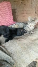 Estou doando dois filhotes de Gato