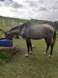 Vendo cavalo Com 3 anos marcha picada muito maso