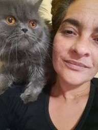 Cat Sitter - Cuidadora de gato