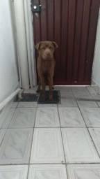 Título do anúncio: Estou doando cachorro