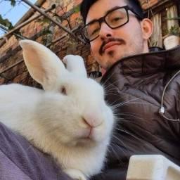 Título do anúncio: Troco coelho gigante