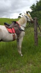 Cavalo de sela