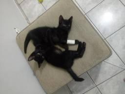 Adoção responsável: Dois filhotes pretos
