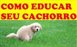 Chow-chow cachorro raça