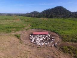 Fazenda linda Em Roraima gado e/ou Lavoura