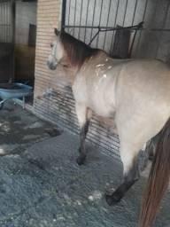 Cavalo de vaquejada esteira