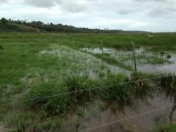 Fazenda com 28 hectares no vale de ceara mirim