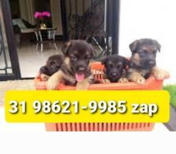 Título do anúncio: Canil Pet Cães Filhotes BH Pastor Dálmata Rottweiler Dálmata Labrador Golden