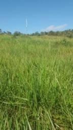 Título do anúncio: 30 ALQUEIRES de terra Alta floresta Rondonia.