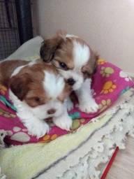 Título do anúncio: Filhotes de cachorro