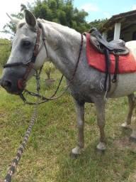 Cavalo de sela pra criança