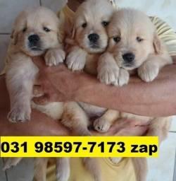 Canil Filhotes Cães Selecionados BH Golden Akita Rottweiler Labrador Dálmatas Pastor