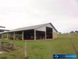 Fazenda em Nova Brasilândia