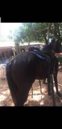Vendo cavalo meio sangue para trabalho