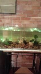 Aquário completo 50 litros , 63 de largura , 32 de comprimento