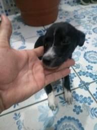Cachorro srd Grátis