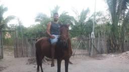 Vendo esse cavalo estradeiro manço de sela