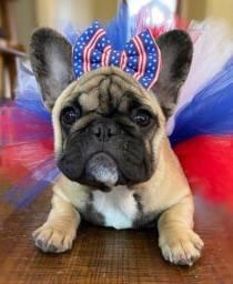 Título do anúncio: Maravilhosos filhotes de Bulldog Francês