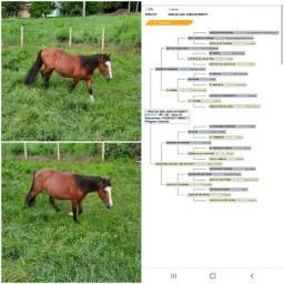 Título do anúncio: Cavalo criolo
