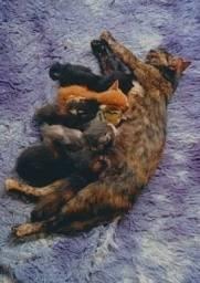 Título do anúncio: Doação de gatinhos filhotes e pato leia a descrição