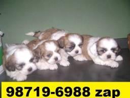 Canil Filhotes Cães Lindos BH Lhasa Poodle Shihtzu Fox Beagle Yorkshire