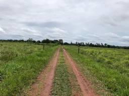 Fazenda em Vigia. Criação de gado (bovino/búfalo); plantação de soja, milho e arroz