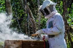 Mel de abelha Puro Anápolis go