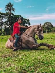 Cavalo anda luz adestrado!!