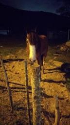 Título do anúncio: Cavalo mangalarga de marcha picada