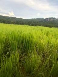 Fazenda em São Gabriel do Oeste  - MS