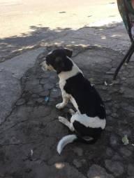 Cachorro Cofap