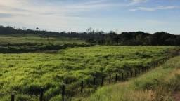 Fazenda de 285 hectares em Iracema/RR, ler descrição do anuncio