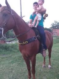 Vendo cavalo de vaquejada (de esquerda)