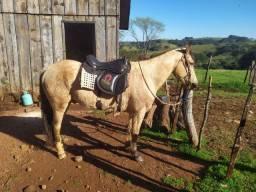 Cavalo QM COM CRIOULO