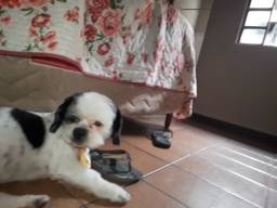 Procura-se esse cachorro na região Guaraní tupi e São Gabriel