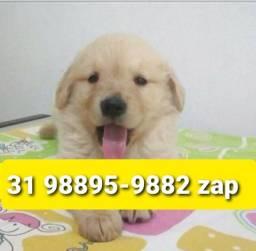 Título do anúncio: Canil Filhotes Cães Belíssimos BH Golden Pastor Labrador Rottweiler Dálmata Boxer