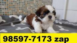 Canil em BH Top Filhotes Cães Shihtzu Basset Poodle Pinscher Yorkshire Maltês Pug Bulldog