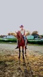 Cavalo bom de montaria