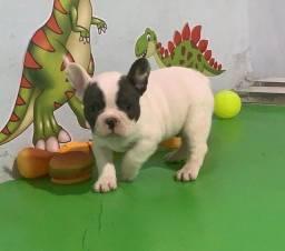 Título do anúncio: Filhotes de Bulldog Francês
