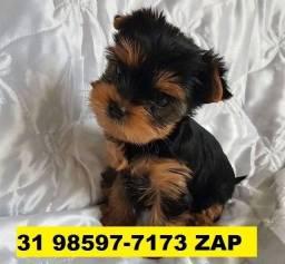 Canil Filhotes Cães Perfeitos BH Yorkshire Basset Poodle Lhasa Maltês Shihtzu Beagle