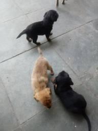 Doacao filhotes cachorro cao viralata