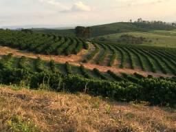 Fazenda de café 38 alqueires no Sul de Minas Gerais