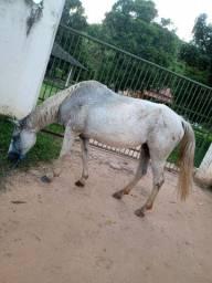 Égua e poutra