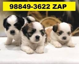 Canil Filhotes Cães Pet BH Lhasa Poodle Yorkshire Maltês Shihtzu Beagle Basset