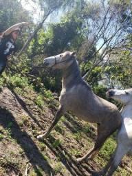 Título do anúncio: Vendo Cavalo  Marcha Batida