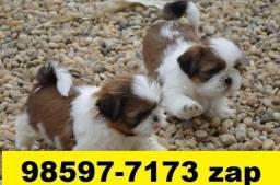 Canil Filhotes Cães Top BH Shihtzu Poodle Fox Pug Lhasa Yorkshire Bulldog Maltês