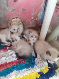 Doações de gatos