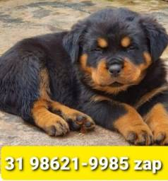 Título do anúncio: Canil Filhotes Cães Grande Porte BH Rottweiler Pastor Dálmata Akita Golden Labrador
