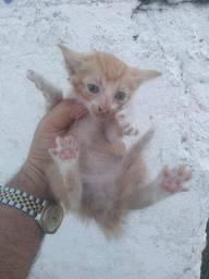 Gatos filhotes pra adoção